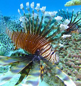 FISH PHOTO fuji