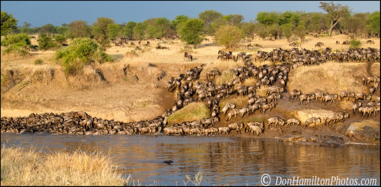 crossing-wildebeest_f7i7290