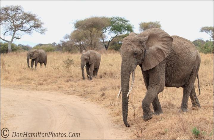 elephant-triof7i3925