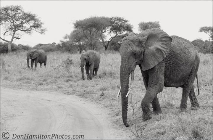 elephant-triomonof7i3925