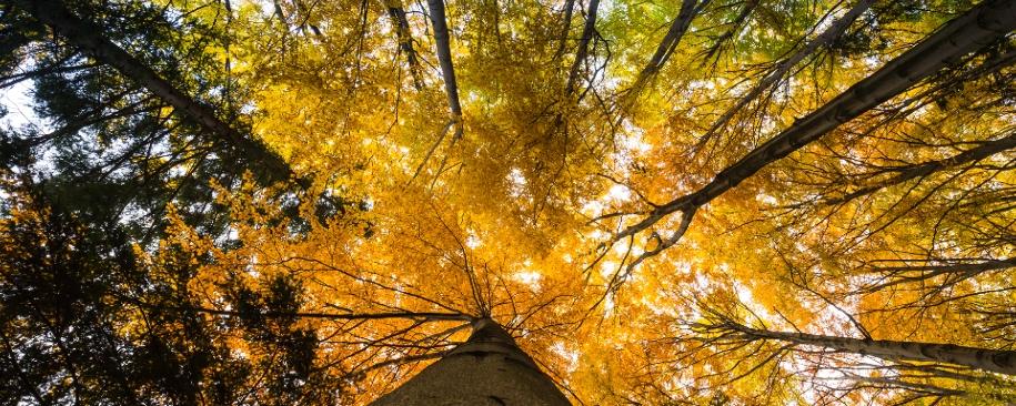 fall-photo-blog-header