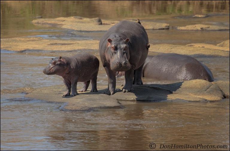 hippo-baby-mom_f7i1563