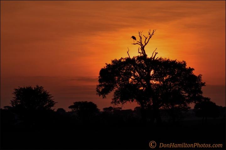 sunrise-on-the-plains_f7i8615