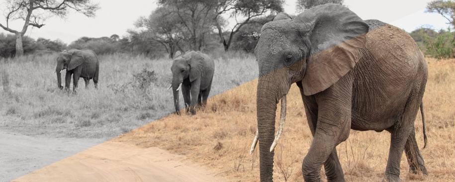 tanzania-blog-header6