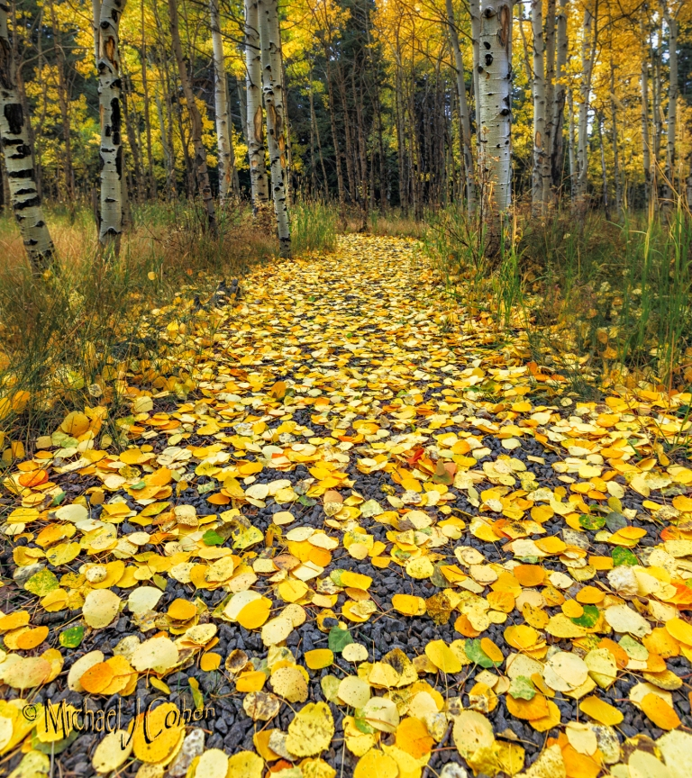 path-through-the-aspens