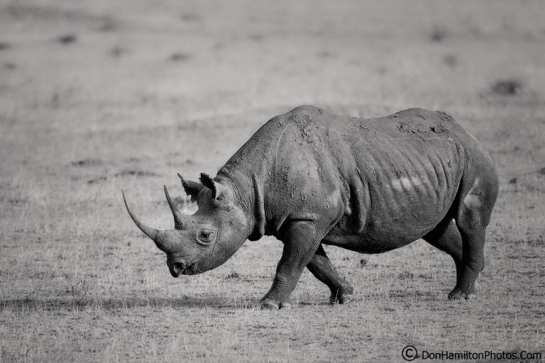 Black-Rhino_F7I9225